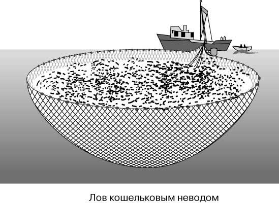 рыболовные кошельковый невод